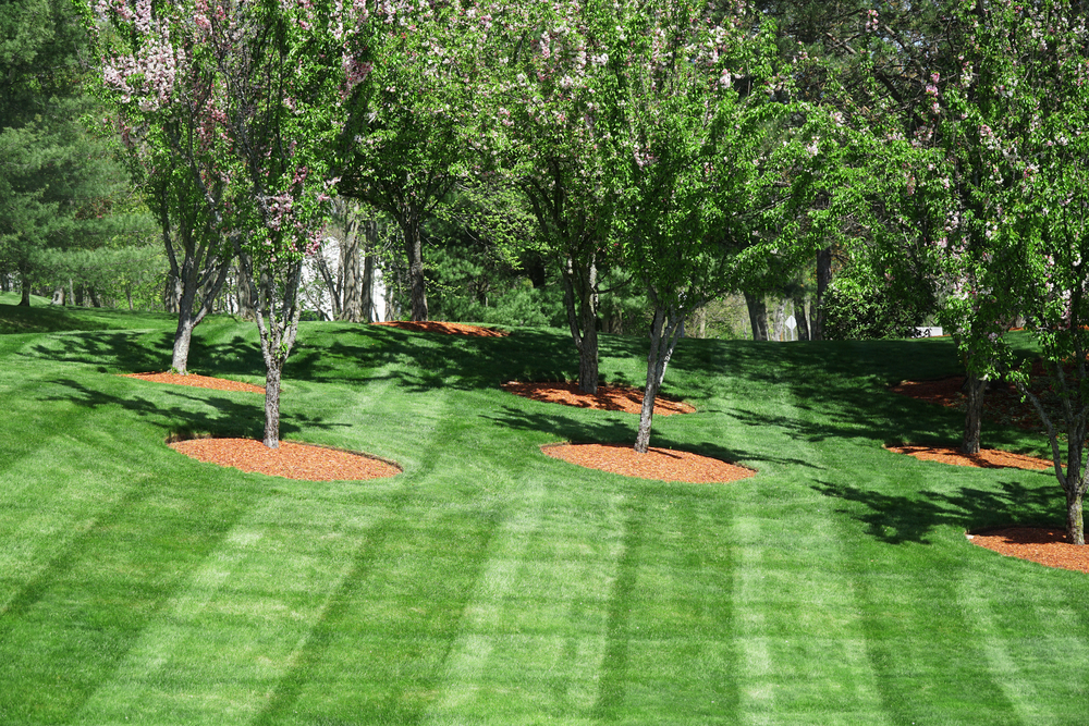 residential lawn care in Plymouth MN